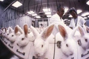 animal_test_rabbits