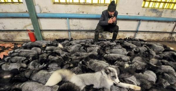 Fazenda de extração de peles perto de Minsk