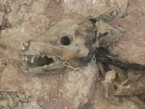 Cadáver em decomposição no canil de Manhuaçu