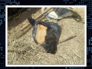 Cães mortos foram encontrados em saco no canil de Caratinga (Foto: TV Super Canal)