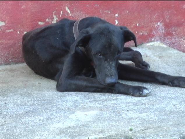 Um dos cães extremamente magros de Caratinga (Foto: TV Super Canal)