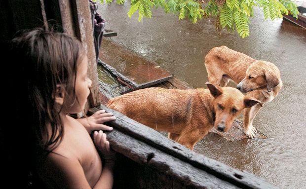 Na Amazônia, os animais vivem em cumplicidade com crianças caboclas (Foto: Divulgação)