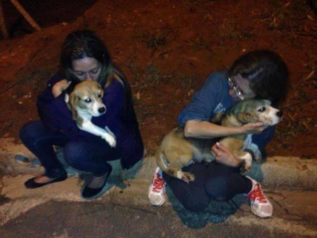 Beagles resgatados e suas protetoras em frente ao Instituto Royal em 2013 (Foto: Reprodução)